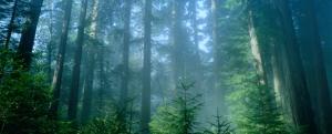 redwood-np