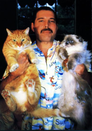 freddie-mercury-cats-5c6fb3e608ae2-jpeg__605